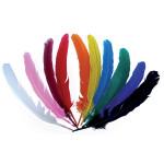 10 grandes plumes d'indiens
